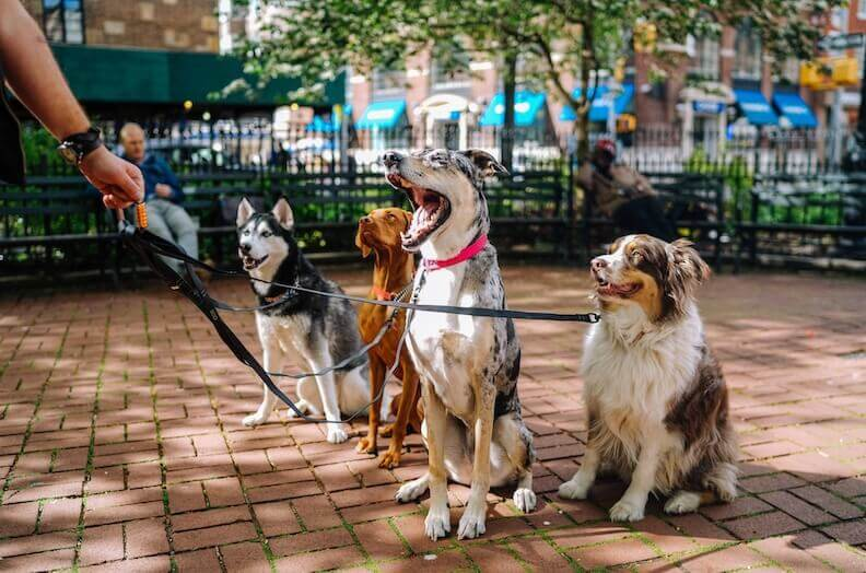 four-different-kinds-of-dogs-sitting-on-the-street